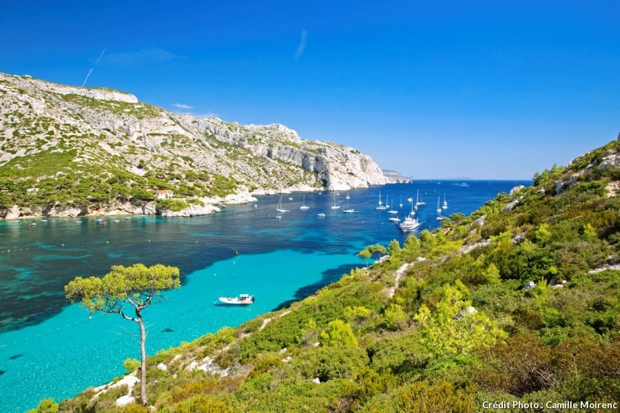 Calanques de Cassis, nature